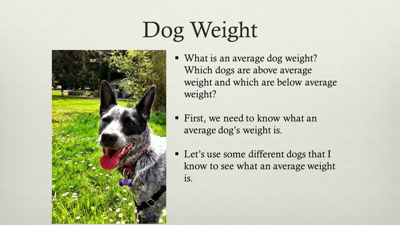 Dog Weight  What is an average dog weight.