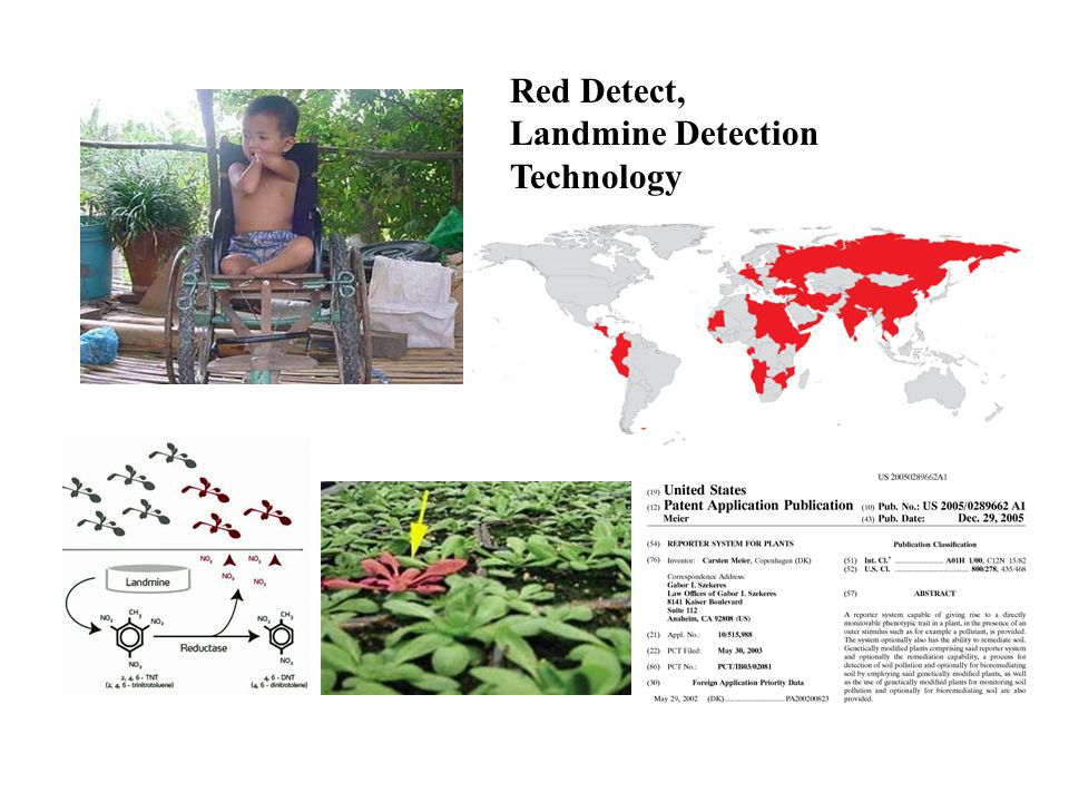 Red Detect, Landmine Detection Technology