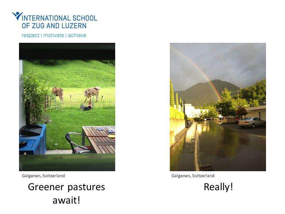 Greener pastures await! Really! Galgenen, Switzerland