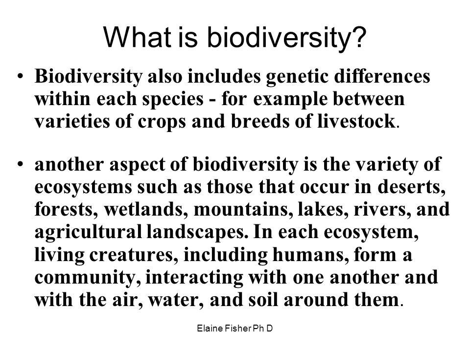 Elaine Fisher Ph D What is biodiversity? Biodiversity also includes genetic differences within each species - for example between varieties of crops a