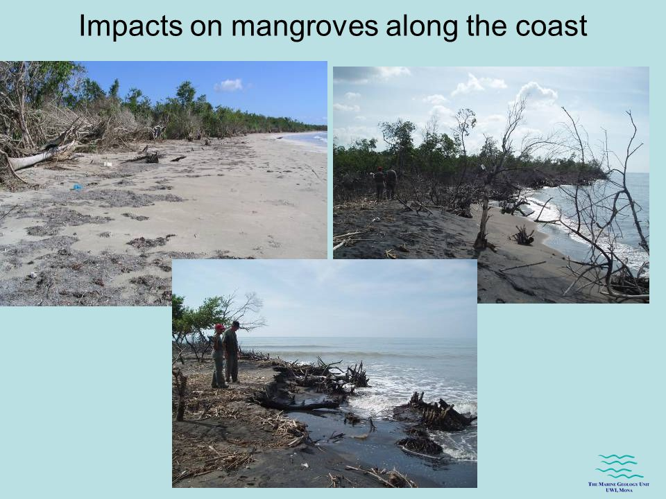 Impacts on mangroves along the coast