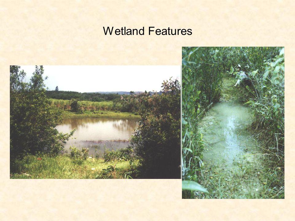 Wetland Features