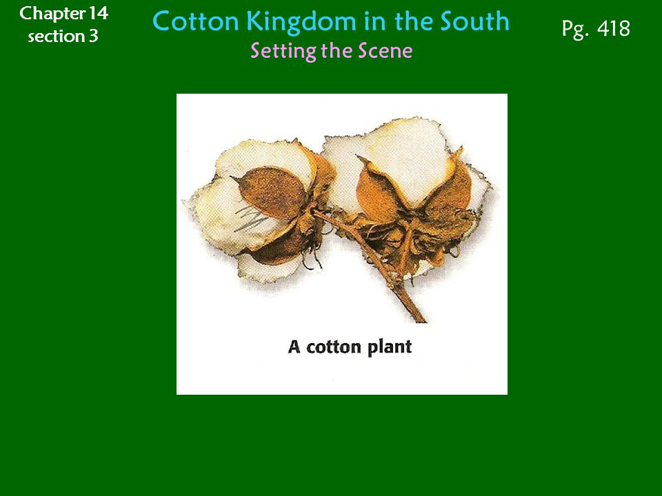 Cotton Kingdom in the South Setting the Scene Pg. 418 Chapter 14 section 3