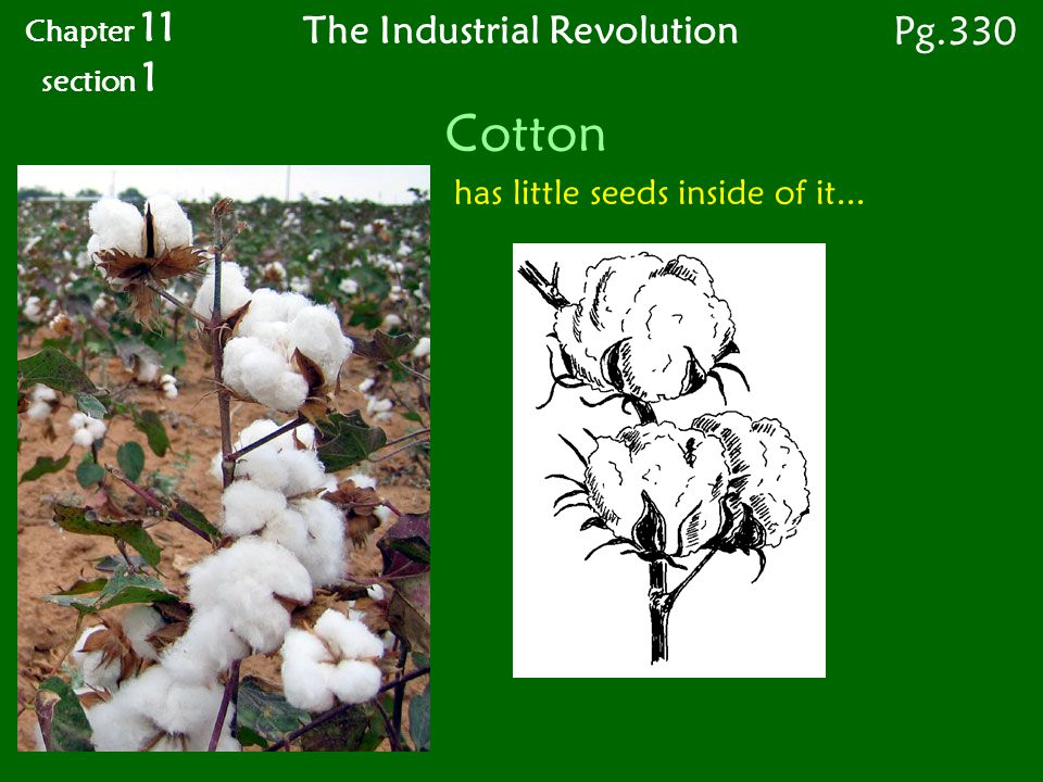 Cotton has little seeds inside of it... Chapter 11 section 1 Pg.330 The Industrial Revolution