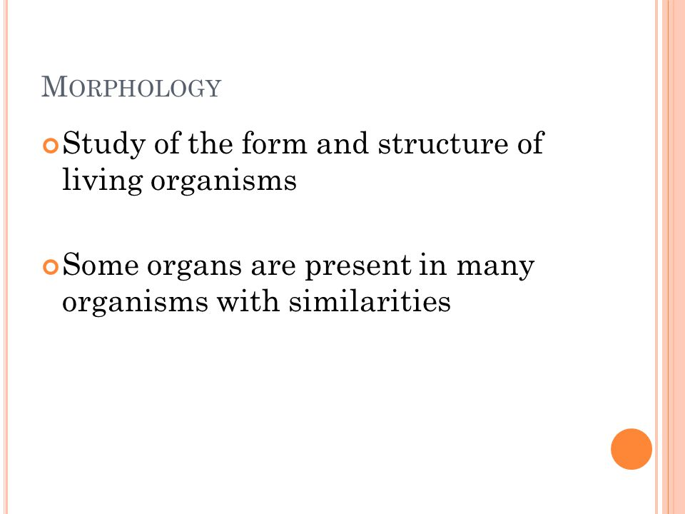 M ORPHOLOGY Study of the form and structure of living organisms Some organs are present in many organisms with similarities