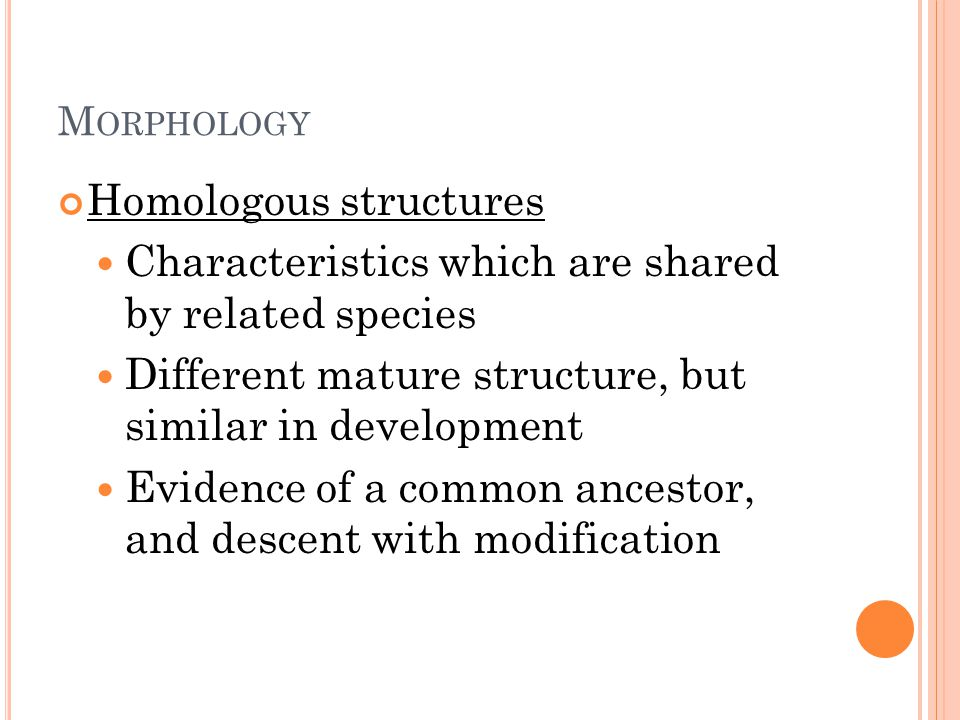 M ORPHOLOGY Homologous structures Characteristics which are shared by related species Different mature structure, but similar in development Evidence