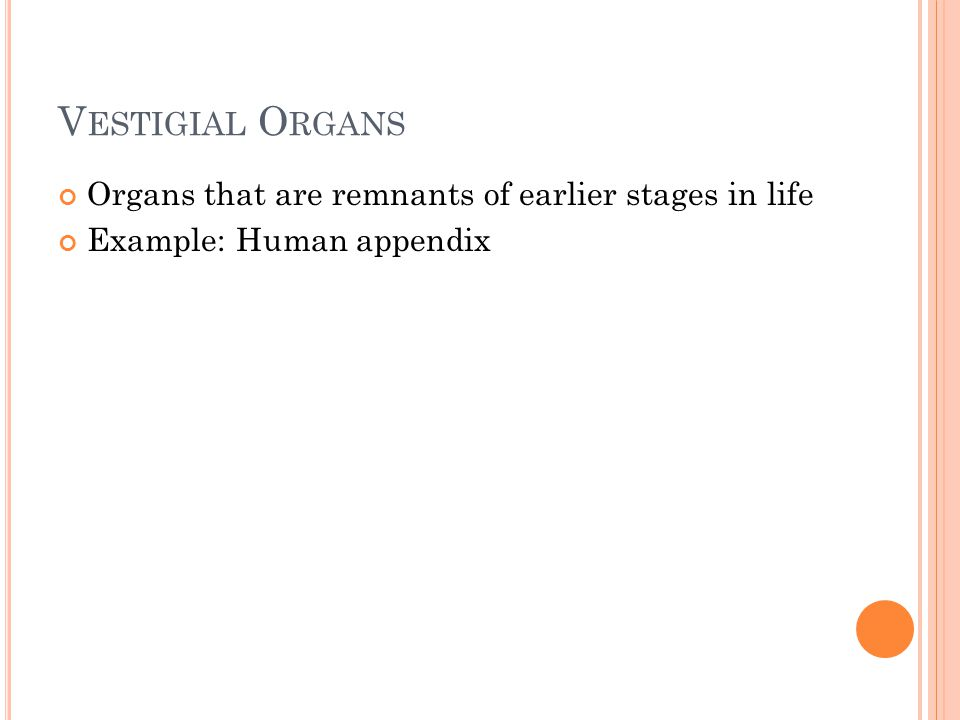 V ESTIGIAL O RGANS Organs that are remnants of earlier stages in life Example: Human appendix