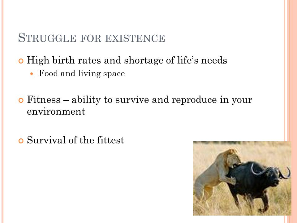 S TRUGGLE FOR EXISTENCE High birth rates and shortage of life's needs Food and living space Fitness – ability to survive and reproduce in your environment Survival of the fittest