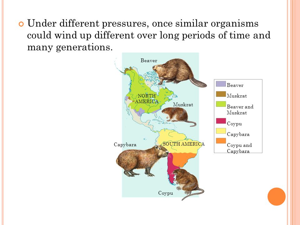 Under different pressures, once similar organisms could wind up different over long periods of time and many generations.