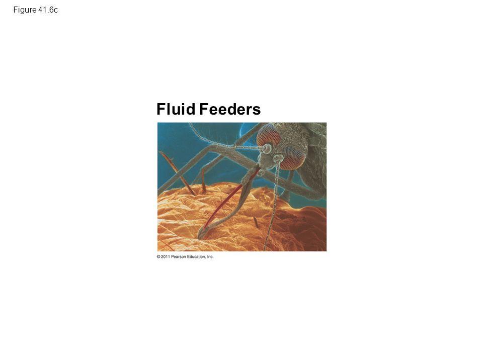 Figure 41.6c Fluid Feeders
