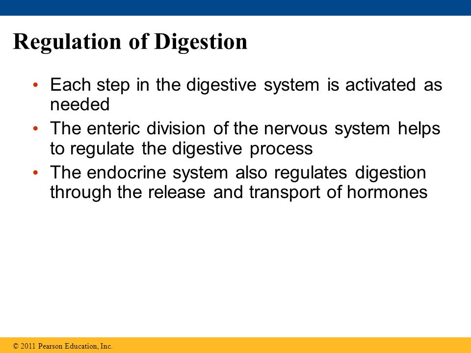 Regulation of Digestion Each step in the digestive system is activated as needed The enteric division of the nervous system helps to regulate the digestive process The endocrine system also regulates digestion through the release and transport of hormones © 2011 Pearson Education, Inc.