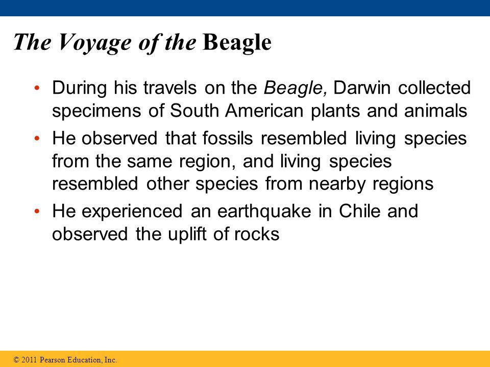 The Voyage of the Beagle During his travels on the Beagle, Darwin collected specimens of South American plants and animals He observed that fossils re