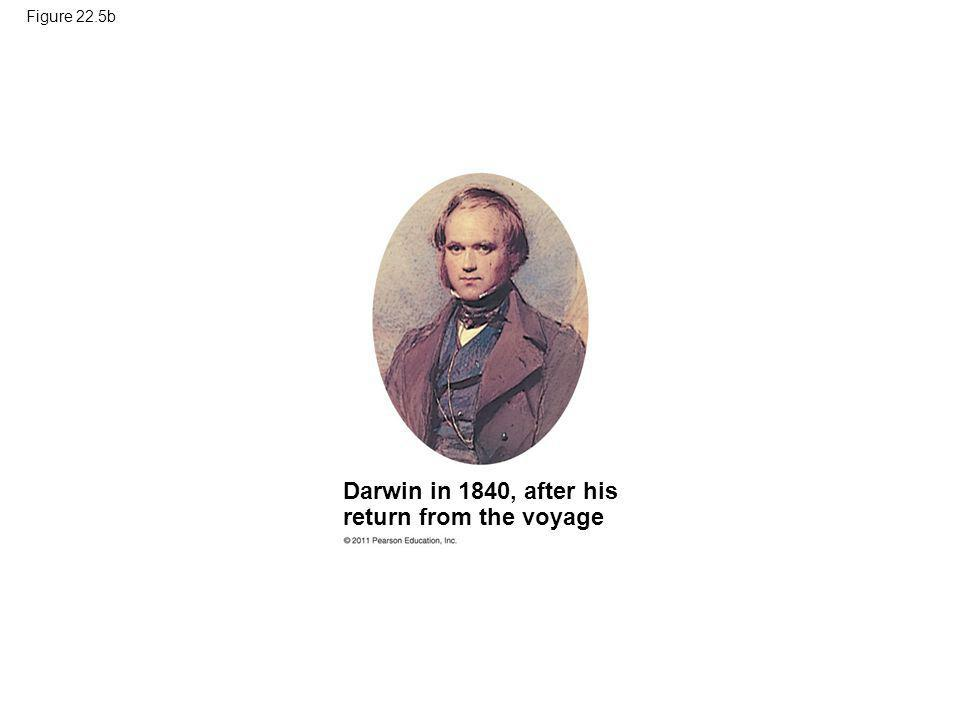 Figure 22.5b Darwin in 1840, after his return from the voyage