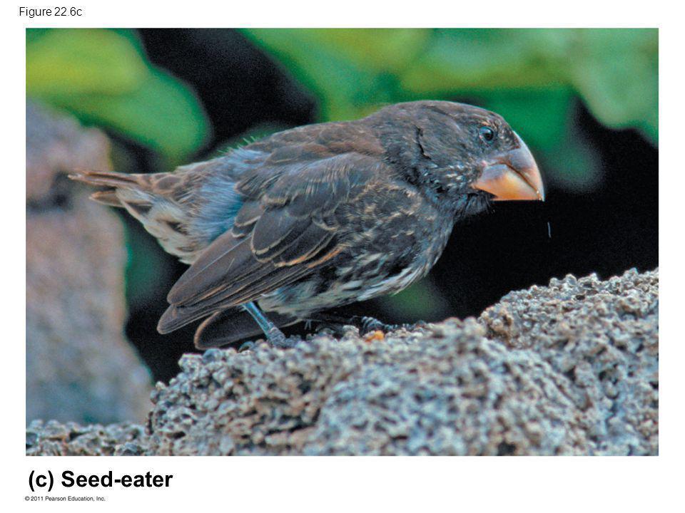Figure 22.6c (c) Seed-eater