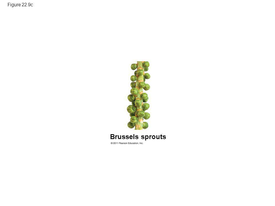 Figure 22.9c Brussels sprouts