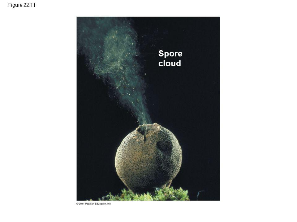 Figure 22.11 Spore cloud