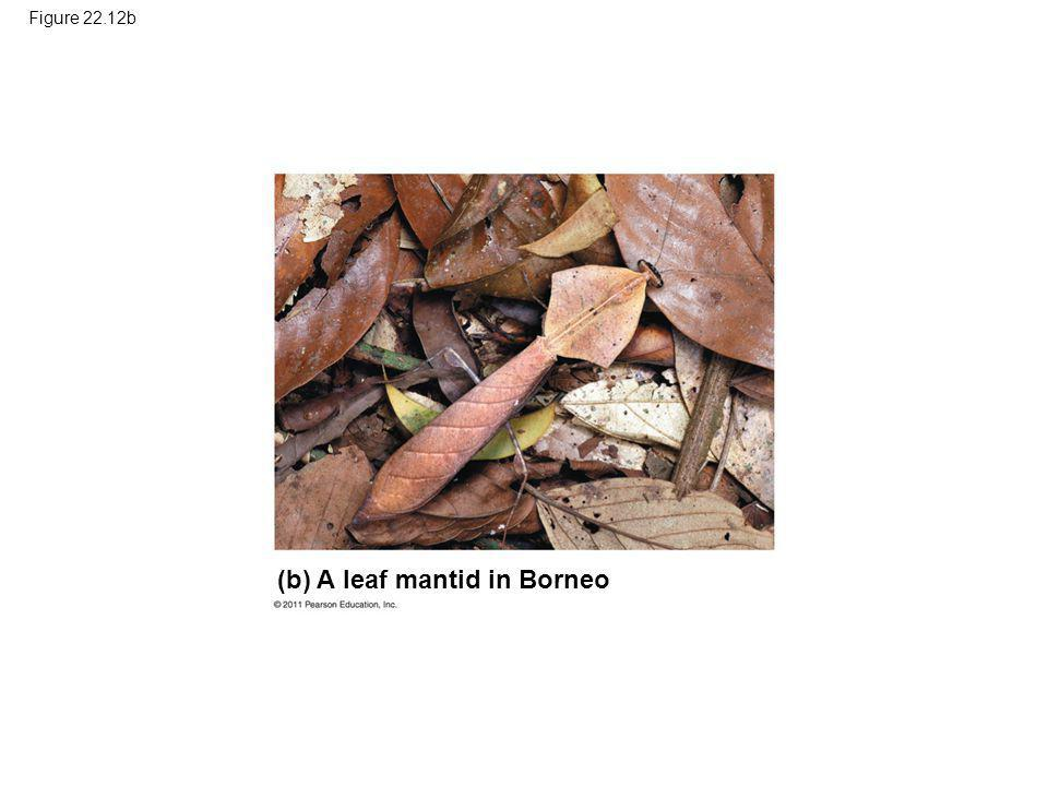 Figure 22.12b (b) A leaf mantid in Borneo