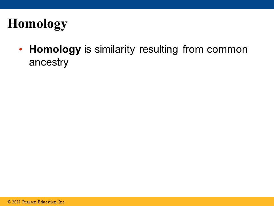 Homology Homology is similarity resulting from common ancestry © 2011 Pearson Education, Inc.