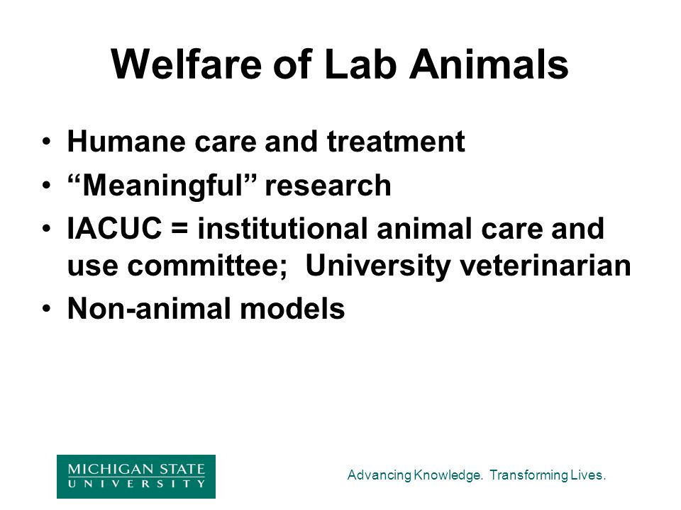 """Advancing Knowledge. Transforming Lives. Welfare of Lab Animals Humane care and treatment """"Meaningful"""" research IACUC = institutional animal care and"""