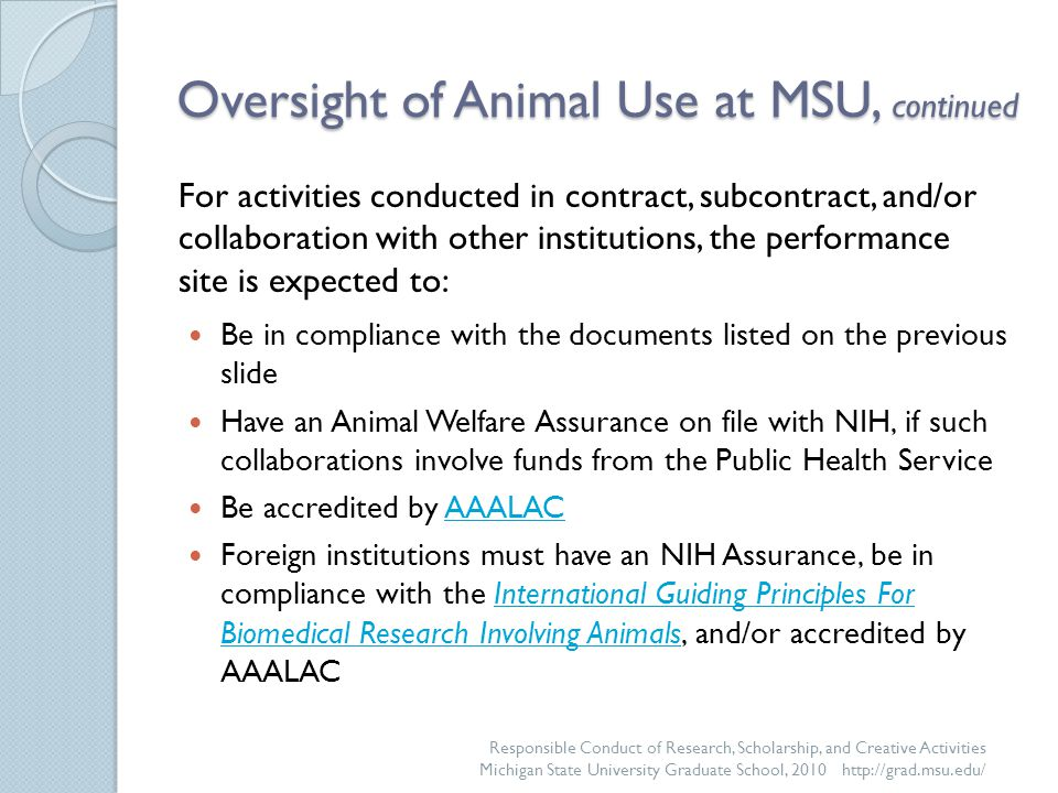 Oversight of Animal Use at MSU, continued Be in compliance with the documents listed on the previous slide Have an Animal Welfare Assurance on file with NIH, if such collaborations involve funds from the Public Health Service Be accredited by AAALACAAALAC Foreign institutions must have an NIH Assurance, be in compliance with the International Guiding Principles For Biomedical Research Involving Animals, and/or accredited by AAALACInternational Guiding Principles For Biomedical Research Involving Animals Responsible Conduct of Research, Scholarship, and Creative Activities Michigan State University Graduate School, 2010 http://grad.msu.edu/ For activities conducted in contract, subcontract, and/or collaboration with other institutions, the performance site is expected to: