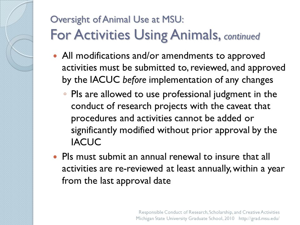 Oversight of Animal Use at MSU: For Activities Using Animals, continued All modifications and/or amendments to approved activities must be submitted to, reviewed, and approved by the IACUC before implementation of any changes ◦ PIs are allowed to use professional judgment in the conduct of research projects with the caveat that procedures and activities cannot be added or significantly modified without prior approval by the IACUC PIs must submit an annual renewal to insure that all activities are re-reviewed at least annually, within a year from the last approval date Responsible Conduct of Research, Scholarship, and Creative Activities Michigan State University Graduate School, 2010 http://grad.msu.edu/