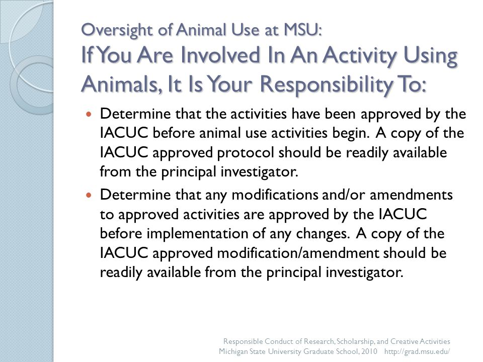 Oversight of Animal Use at MSU: If You Are Involved In An Activity Using Animals, It Is Your Responsibility To: Determine that the activities have been approved by the IACUC before animal use activities begin.
