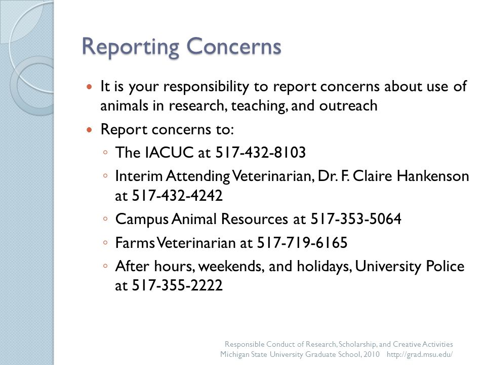 Reporting Concerns It is your responsibility to report concerns about use of animals in research, teaching, and outreach Report concerns to: ◦ The IACUC at 517-432-8103 ◦ Interim Attending Veterinarian, Dr.