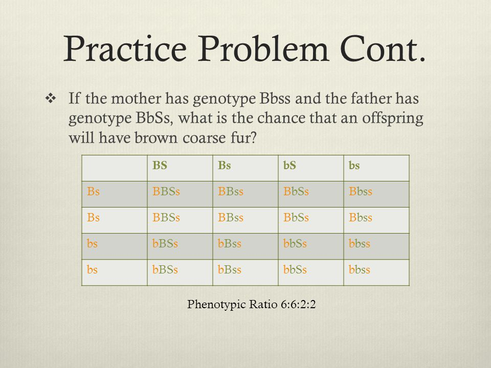 Practice Problem Cont.  If the mother has genotype Bbss and the father has genotype BbSs, what is the chance that an offspring will have brown coarse
