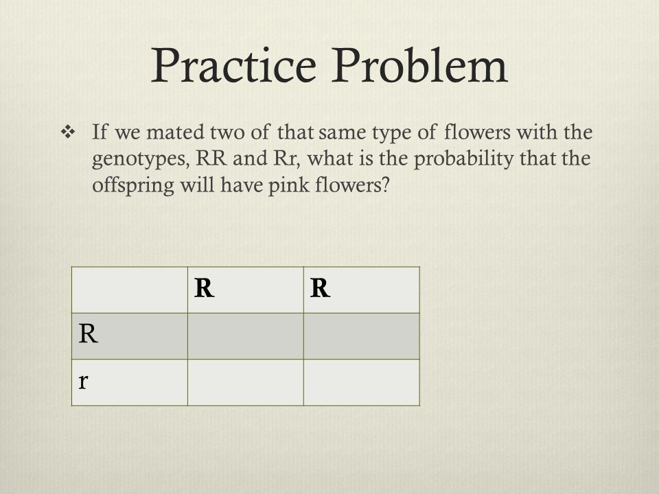 Practice Problem  If we mated two of that same type of flowers with the genotypes, RR and Rr, what is the probability that the offspring will have pi