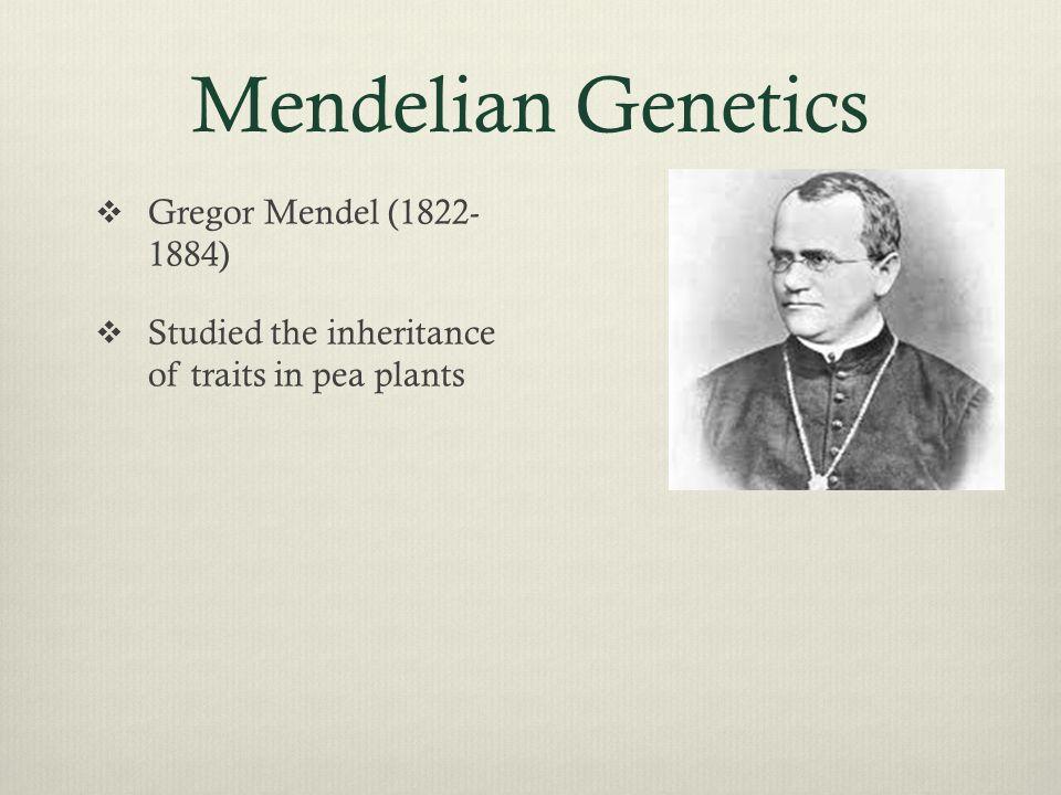 Mendelian Genetics  Gregor Mendel (1822- 1884)  Studied the inheritance of traits in pea plants
