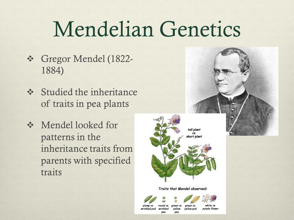 Mendelian Genetics  Gregor Mendel (1822- 1884)  Studied the inheritance of traits in pea plants  Mendel looked for patterns in the inheritance trai