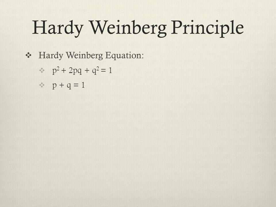 Hardy Weinberg Principle  Hardy Weinberg Equation:  p 2 + 2pq + q 2 = 1  p + q = 1