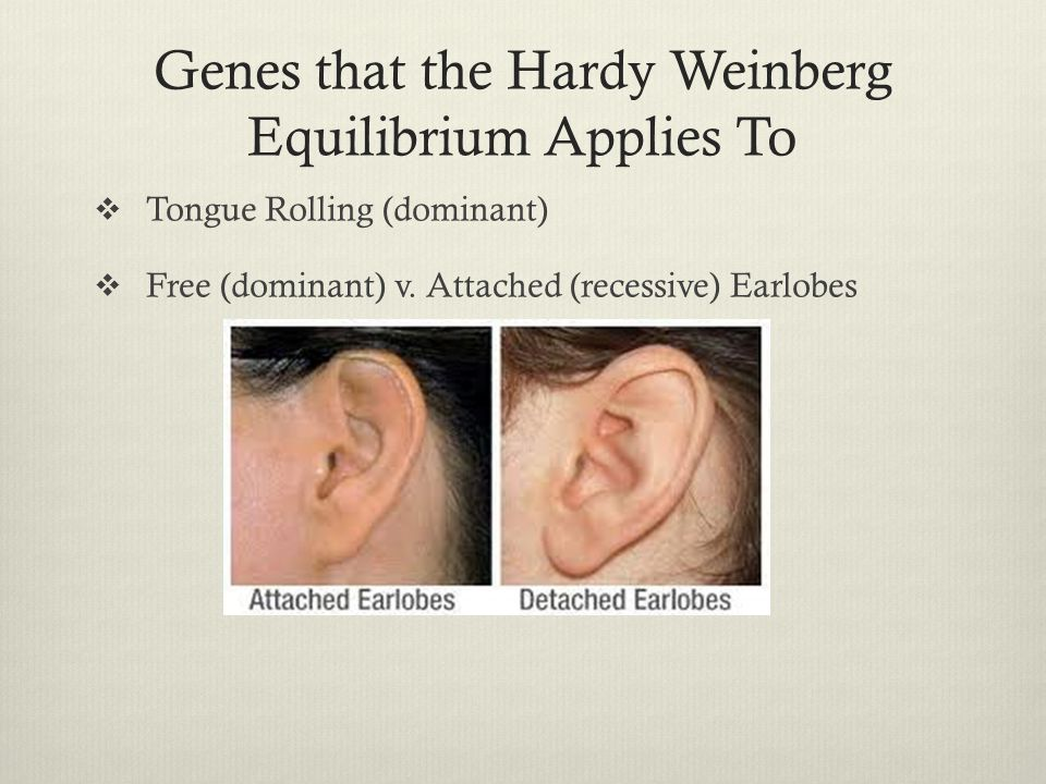 Genes that the Hardy Weinberg Equilibrium Applies To  Tongue Rolling (dominant)  Free (dominant) v. Attached (recessive) Earlobes