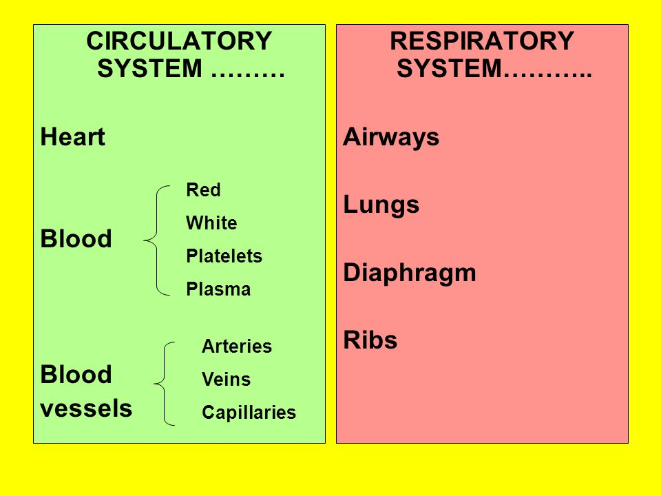 CIRCULATORY SYSTEM ……… Heart Blood Blood vessels RESPIRATORY SYSTEM………..