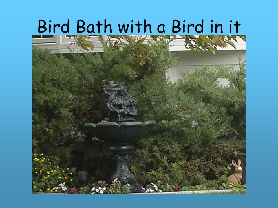 Bird Bath with a Bird in it