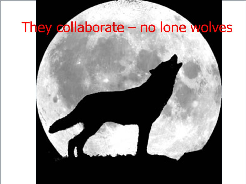 They collaborate – no lone wolves