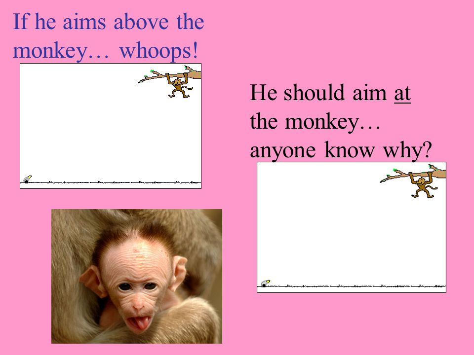 If he aims above the monkey… whoops! He should aim at the monkey… anyone know why