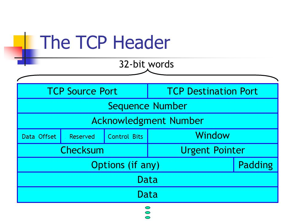 The TCP Header TCP Source PortTCP Destination Port ChecksumUrgent Pointer Window Data Offset.