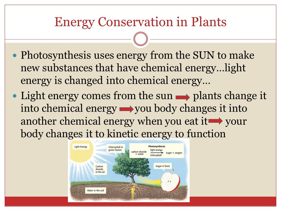 Energy Conservation in Plants Photosynthesis uses energy from the SUN to make new substances that have chemical energy…light energy is changed into ch