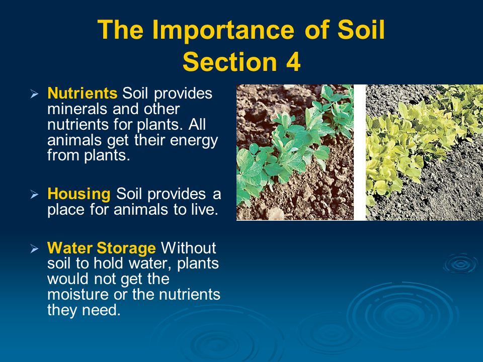 The Importance of Soil Section 4   Nutrients Soil provides minerals and other nutrients for plants.