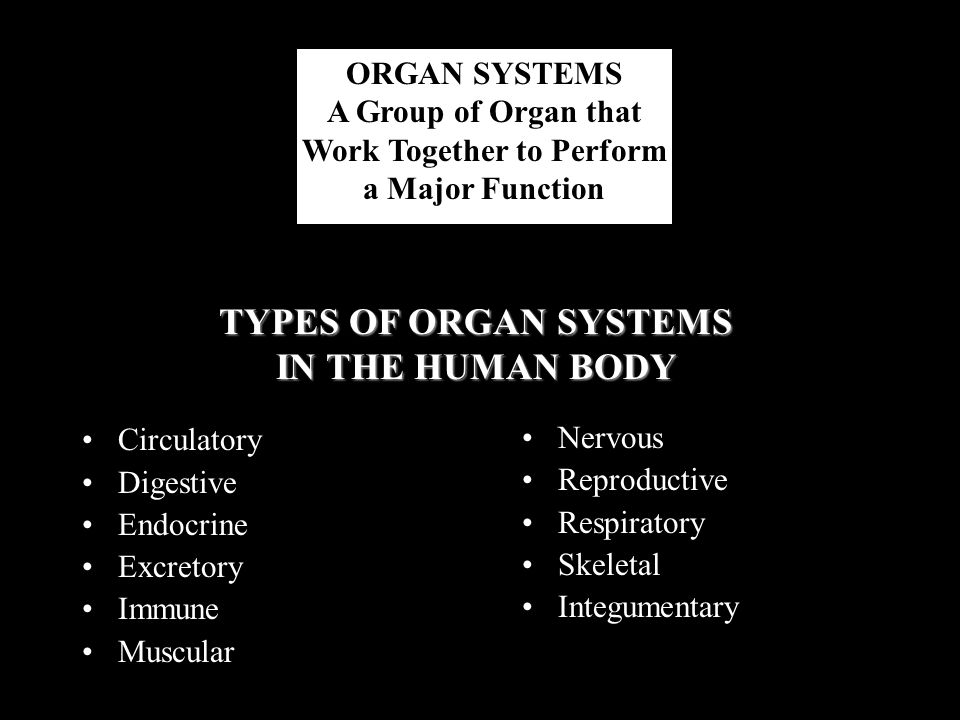 ORGAN SYSTEMS A Group of Organ that Work Together to Perform a Major Function Circulatory Digestive Endocrine Excretory Immune Muscular Nervous Reprod