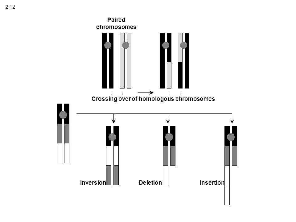 2.12 Crossing over of homologous chromosomes Paired chromosomes InversionDeletionInsertion