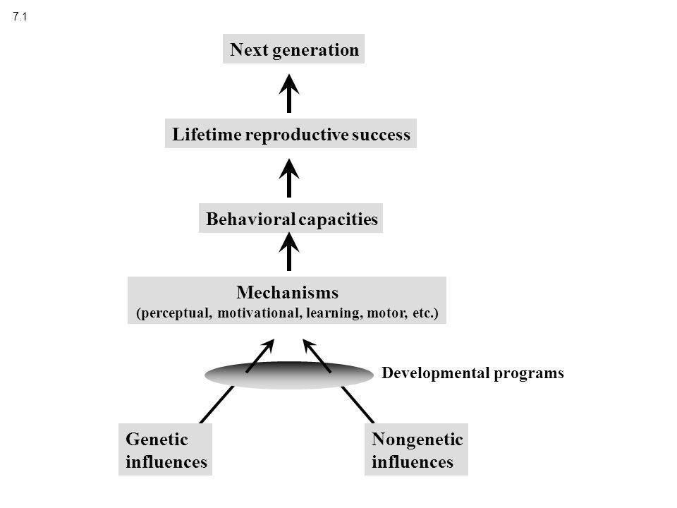 7.1 Mechanisms (perceptual, motivational, learning, motor, etc.) Behavioral capacities Lifetime reproductive success Next generation Developmental programs Genetic influences Nongenetic influences