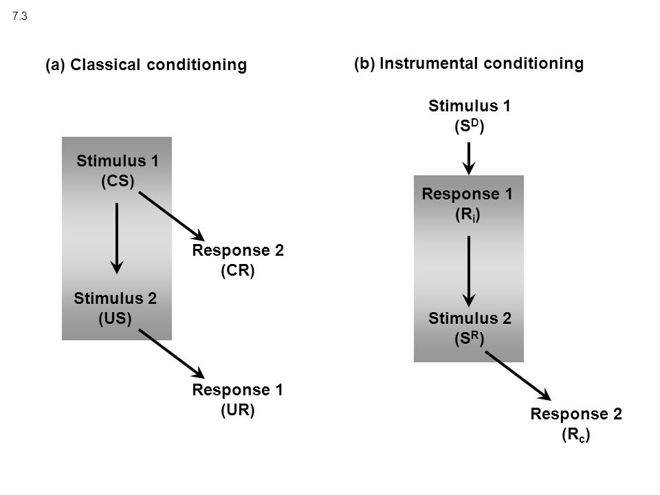 7.3 (a) Classical conditioning (b) Instrumental conditioning Stimulus 1 (CS) Stimulus 2 (US) Response 2 (CR) Response 1 (UR) Stimulus 1 (S D ) Stimulus 2 (S R ) Response 1 (R i ) Response 2 (R c )