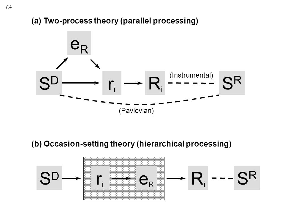 7.4 SDSD RiRi SRSR (Pavlovian) eReR (a) Two-process theory (parallel processing) (b) Occasion-setting theory (hierarchical processing) SDSD riri eReR RiRi SRSR riri (Instrumental)