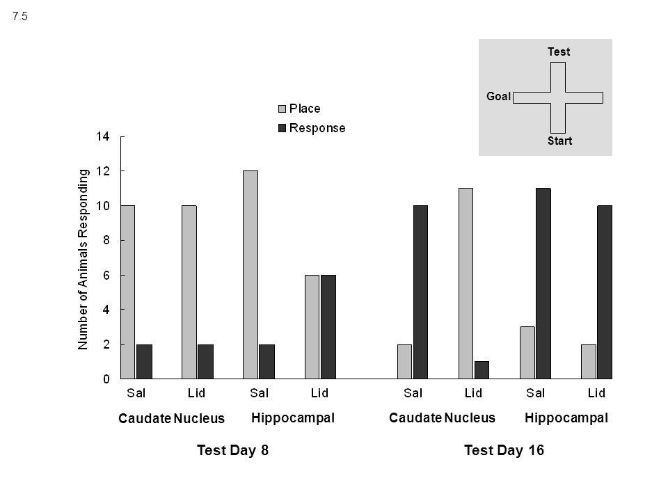7.5 Test Start Goal Caudate Nucleus Hippocampal Test Day 8Test Day 16