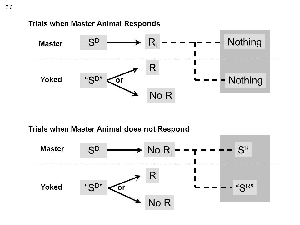 7.6 Master Yoked RiRi Nothing No R Trials when Master Animal Responds R SDSD Master Yoked No R i S D SRSR No R R Trials when Master Animal does not Respond Nothing S R or S D SDSD