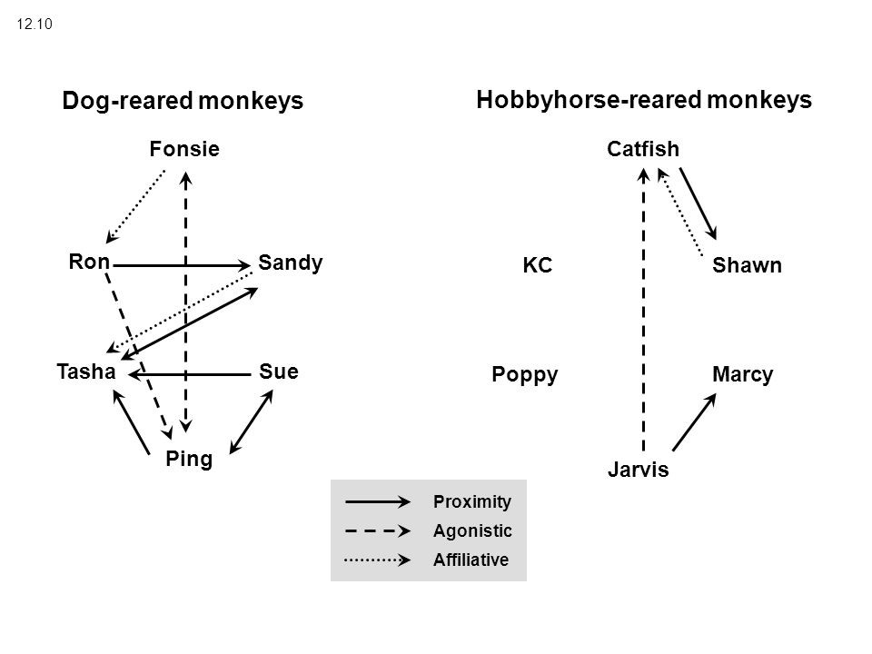 12.10 Dog-reared monkeys Hobbyhorse-reared monkeys Fonsie Sandy Sue Ping Tasha Ron Catfish Shawn Marcy Jarvis Poppy KC Proximity Agonistic Affiliative