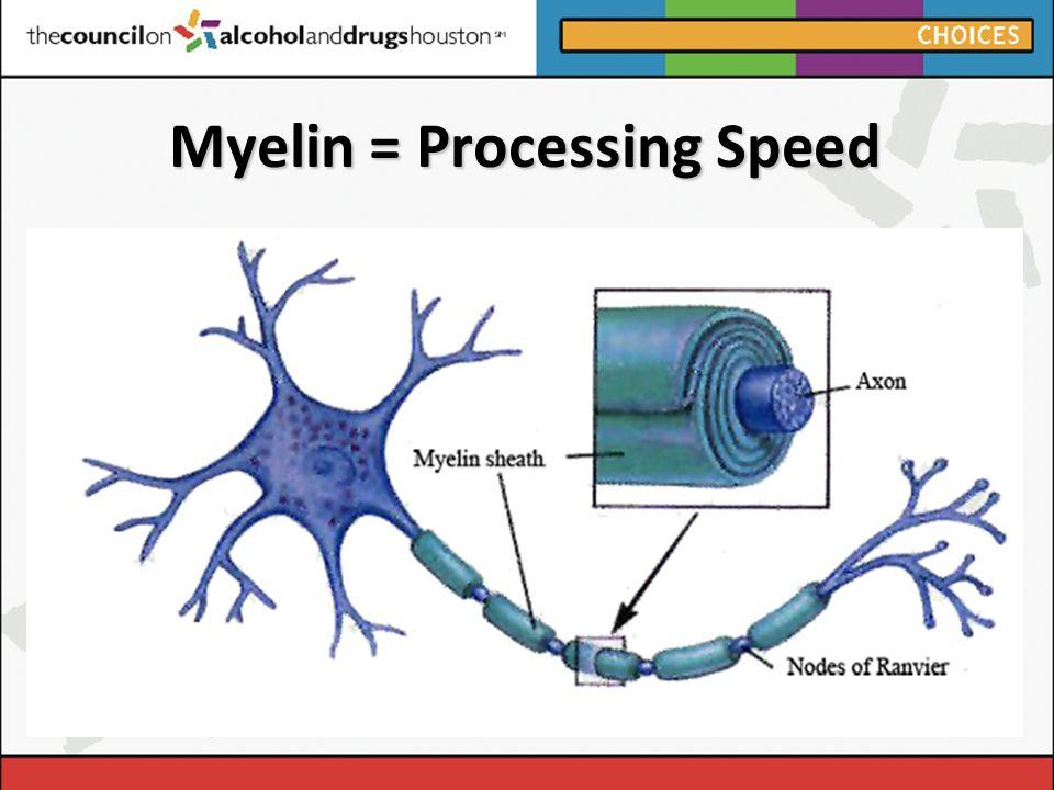 Myelin = Processing Speed