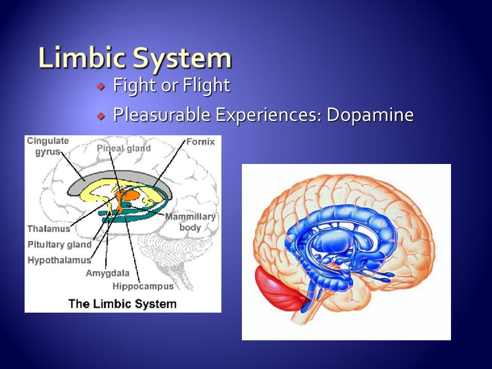  Fight or Flight  Pleasurable Experiences: Dopamine